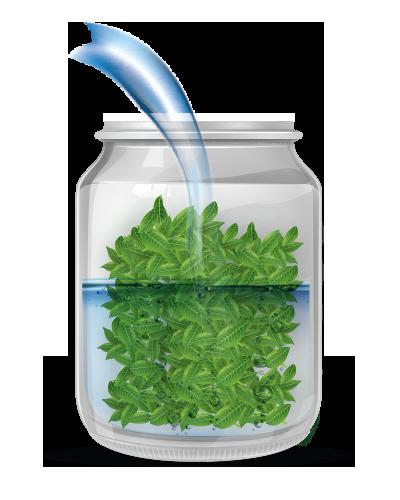 homemade liquid stevia 100% natural - Ftiakste apostagma apo fylla stevia 100% fysiko